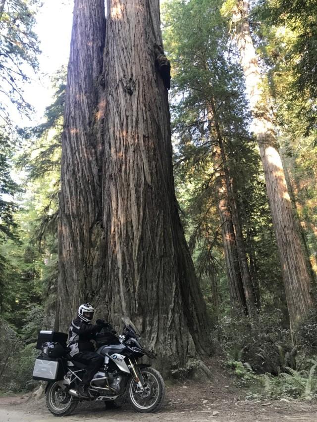 gs1200 redwoods